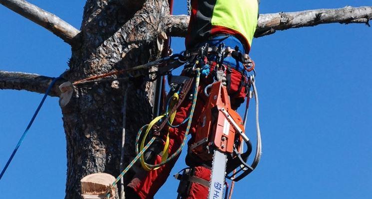 tecnica tree climbing