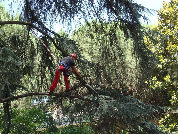 operare in tree climbing