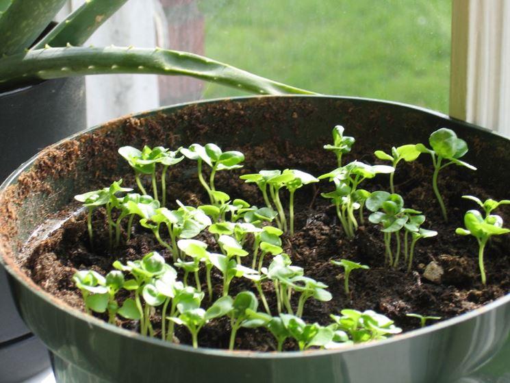 Aromatiche starter pack le 5 piante aromatiche da tenere - Cucina sul balcone ...