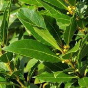 erbe aromatiche elenco