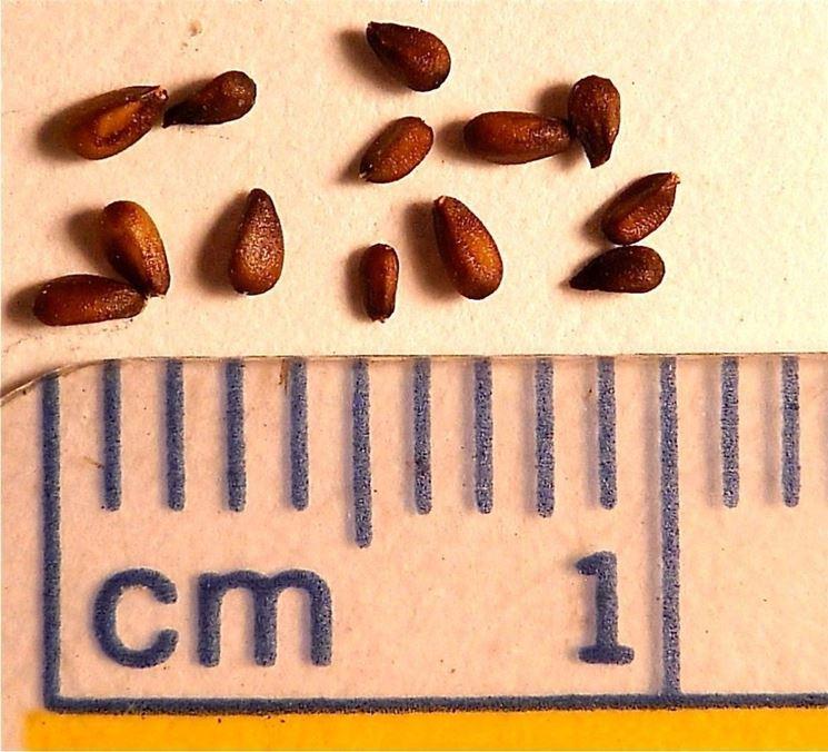 semi melissa