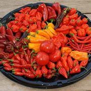 varietà di peperoncino
