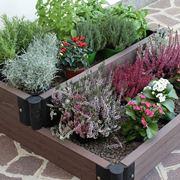 piante aromatiche salutari