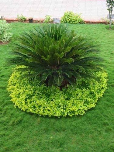 Allestimento giardino crea giardino for Allestimento giardino
