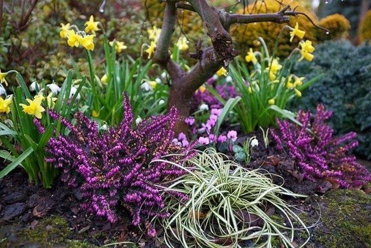 piante per giardino invernale