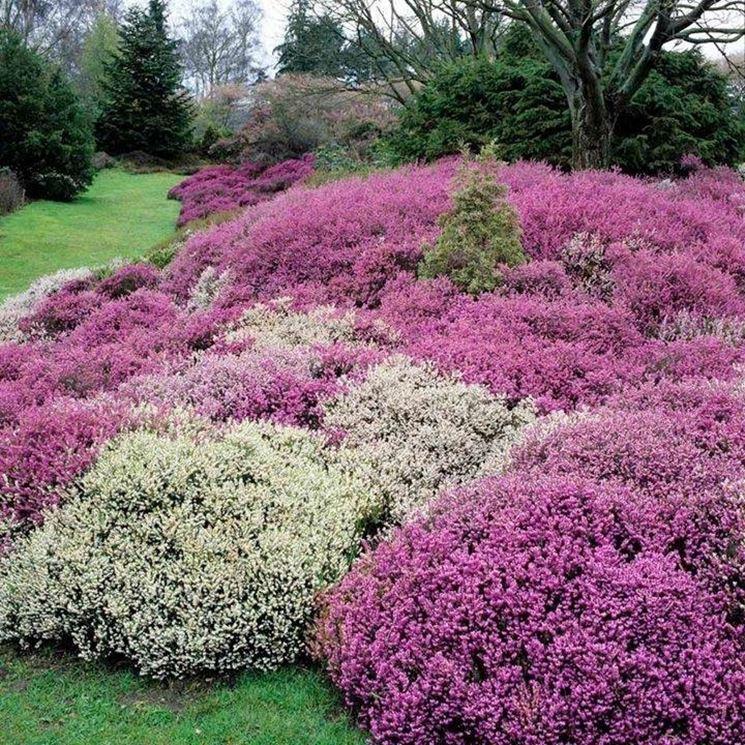 Come preparare un giardino invernale crea giardino for Piante x aiuole