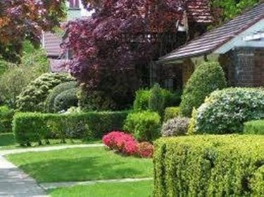 Creare un giardino fai da te crea giardino - Creare un giardino fai da te ...