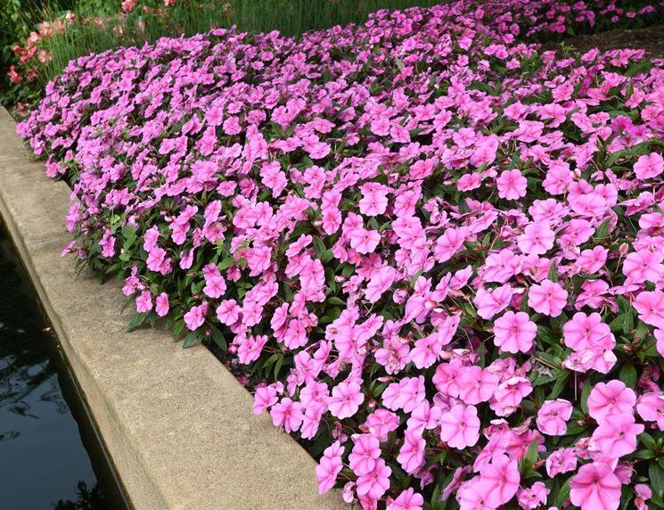 Piante Surfinie : Giardini fai da te crea giardino realizzare