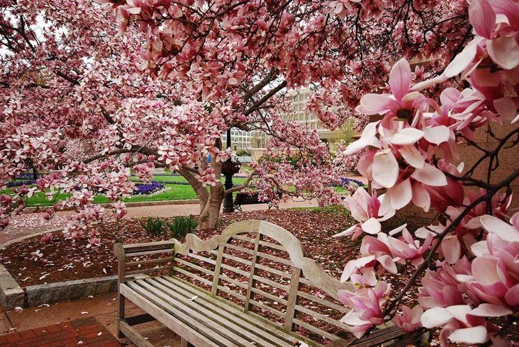 Giardini fioriti crea giardino realizzare un giardino for Alberelli da giardino fioriti