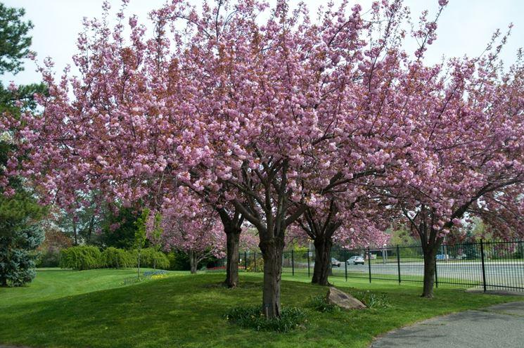 fiori da giardino giardino fiorito : Giardini fioriti - Crea giardino - Realizzare un giardino fiorito