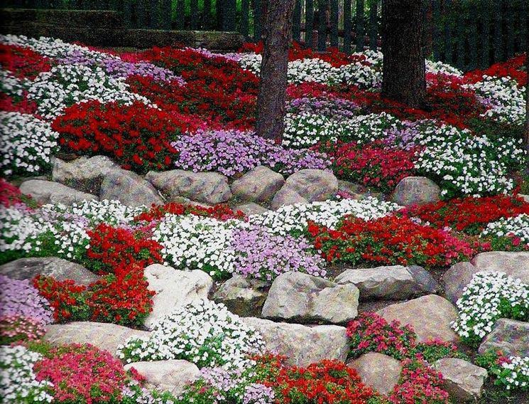 giardino <em>roccioso</em> fiorito