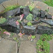Giardini rocciosi fai da te crea giardino for Giardini rocciosi progettazione