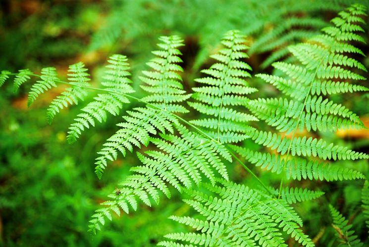 Giardini rocciosi crea giardino giardino roccioso - La felce pianta ...