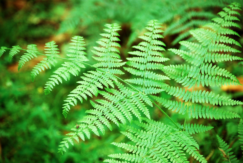 Giardini rocciosi crea giardino - La felce pianta ...