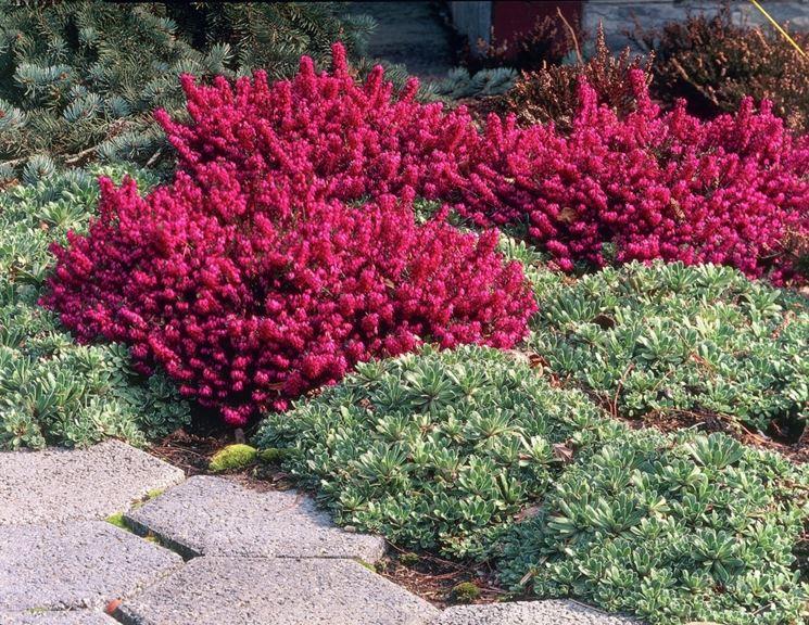 Giardino mediterraneo crea giardino giardino in stile for Cespugli fioriti da giardino