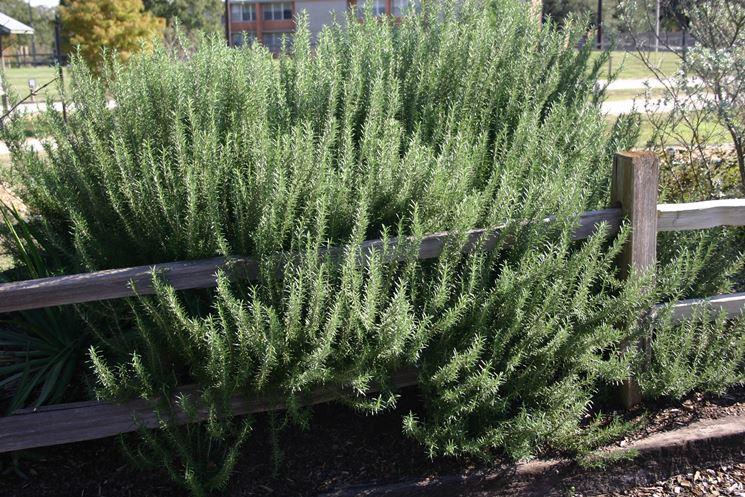 Giardino mediterraneo crea giardino giardino in stile for Piante basso fusto da giardino