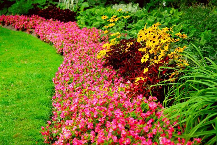aiuole fiorite