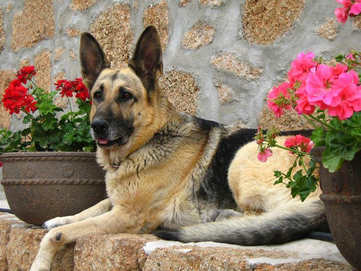 Il terrazzo a prova di cane crea giardino terrazzo con for Piante velenose per i cani
