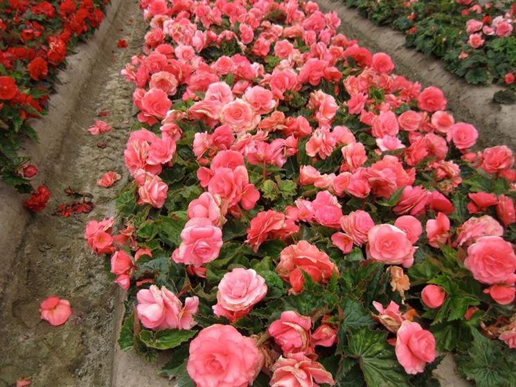 Piccoli giardini privati crea giardino allestire un - Progetti piccoli giardini privati ...