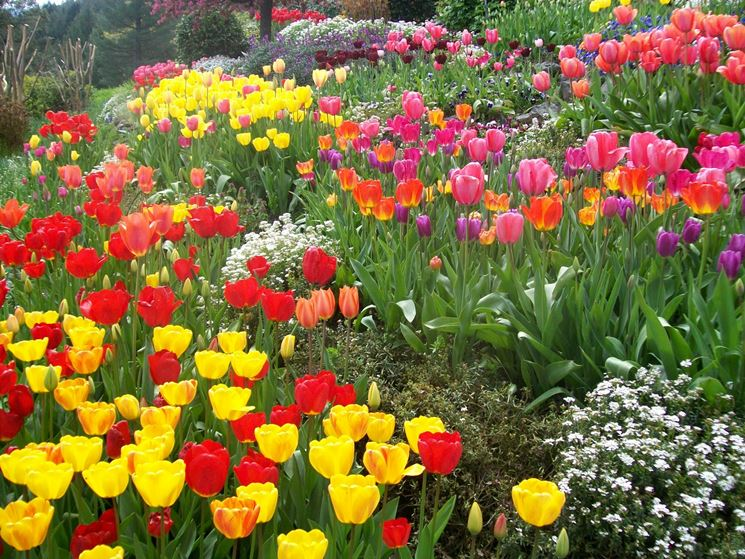 Piccoli giardini privati crea giardino allestire un for Piccoli giardini ornamentali