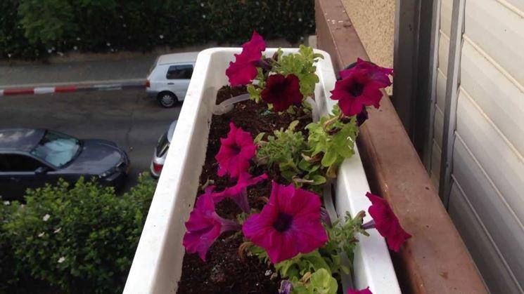 acqua dei condizionatori alle piante