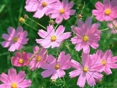 Aiuola pieno sole domande e risposte giardino for Piante da giardino perenni pieno sole