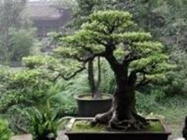 Giardino zen domande e risposte giardino for Giardino zen piante