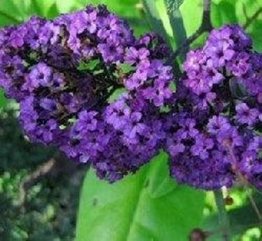 Piante Da Fiore Domande E Risposte Giardino