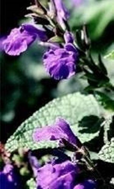 Piante rare domande e risposte giardino for Piante rare