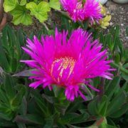 piante pieno sole