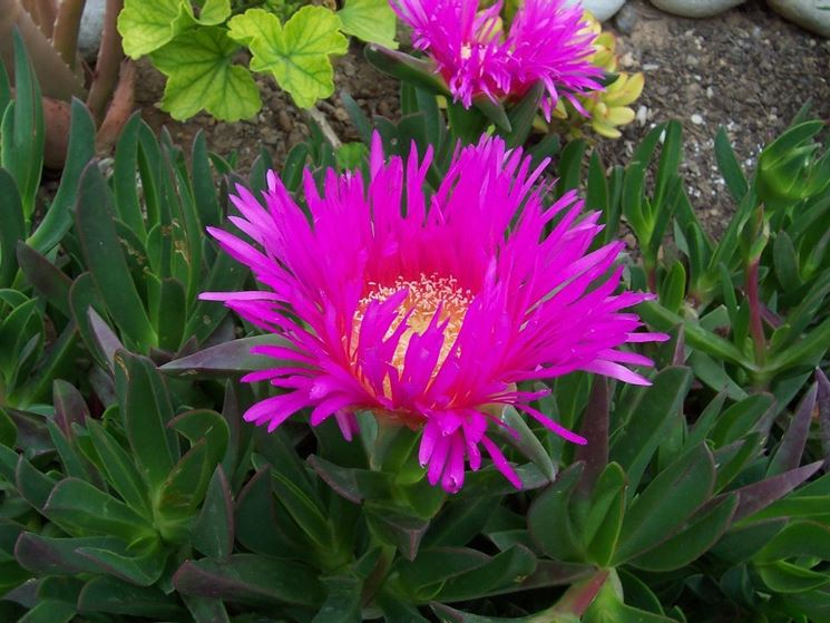 Piante sul terrazzo soleggiato domande e risposte giardino - Fiori da giardino estivi ...