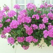 fiori resistenti al sole