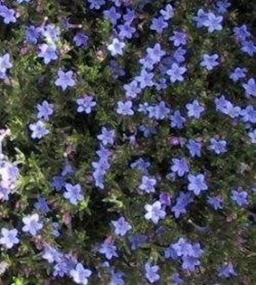 Piante fiorite tutto lanno idee per il design della casa - Piante fiorite ...