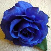 rosa blu esiste