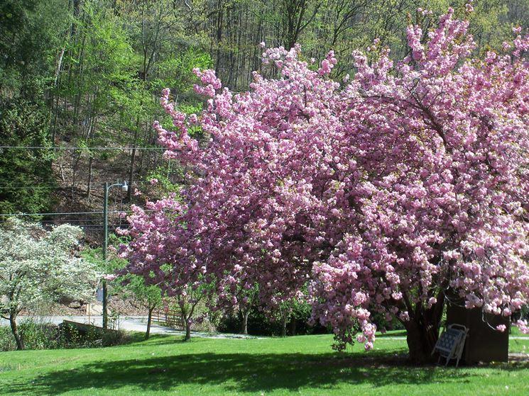 pianta fiorita in giardino