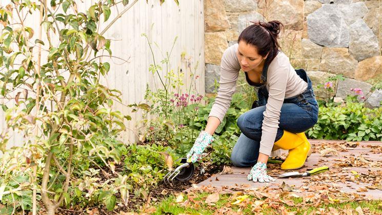 Lavori del mese giardino dicembre lavori del mese - Lavori in giardino ...