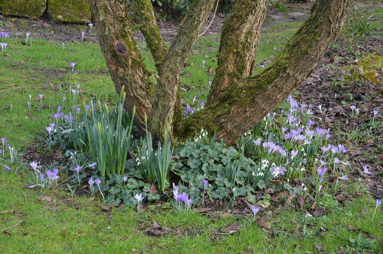 lavori <strong>in giardino</strong> febbraio