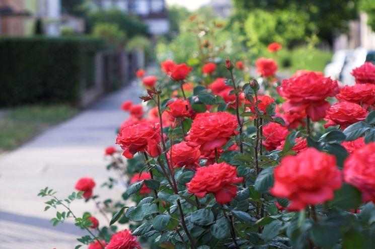 Lavori del mese giardino febbraio lavori del mese - Lavori in giardino ...