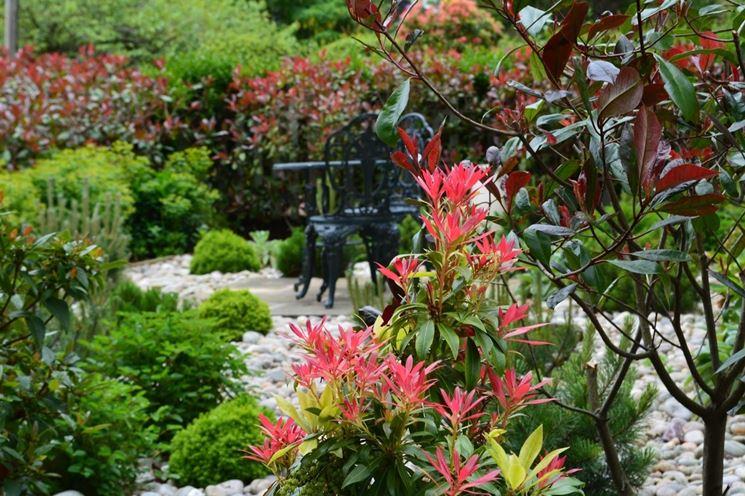 Lavori del mese giardino giugno lavori del mese giardino - Lavori in giardino ...