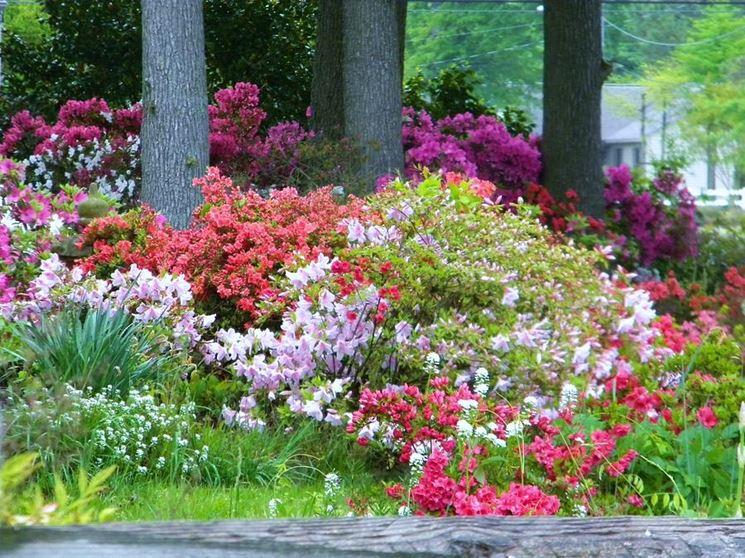 Lavori del mese giardino maggio lavori del mese giardino - Azalee da esterno ...