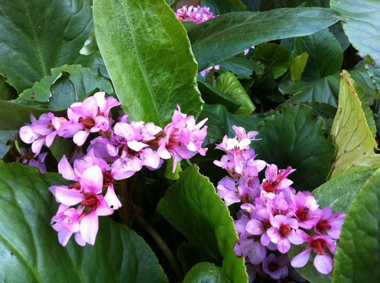 Lavori del mese giardino marzo lavori del mese giardino - Lavori in giardino ...