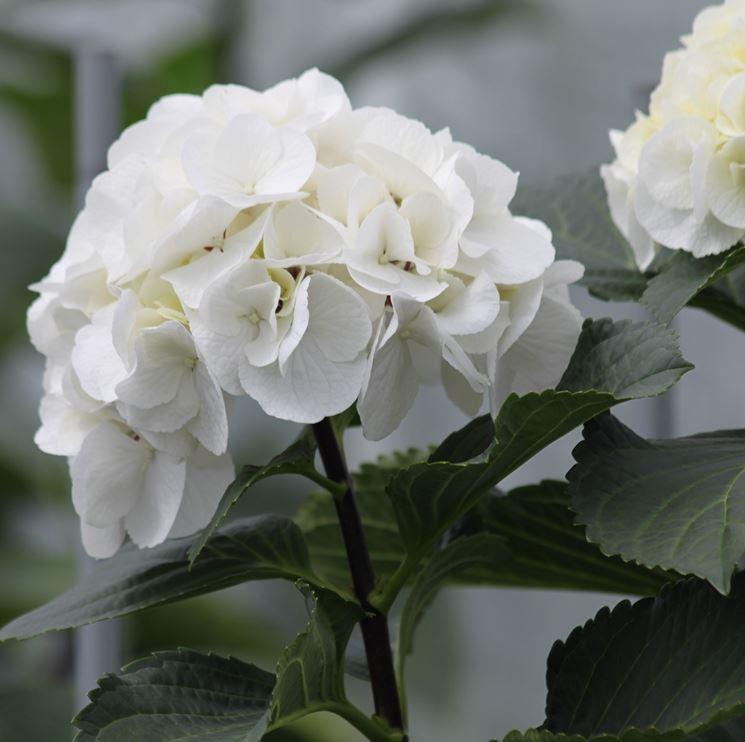 Favorito Lavori del mese giardino settembre - Lavori del mese giardino  XH34