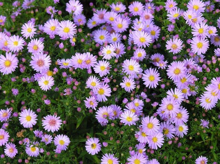 piante autunnali colorate