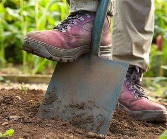 Lavori del mese giardino