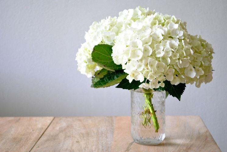 Ortensia bianca ortensie ortensia colore bianco for Ortensie bianche