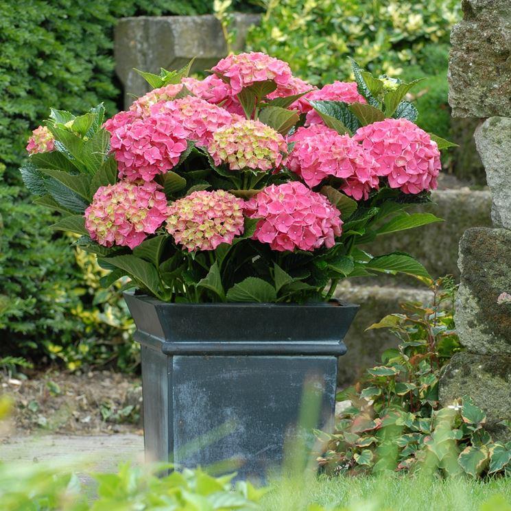 Una pianta in vaso