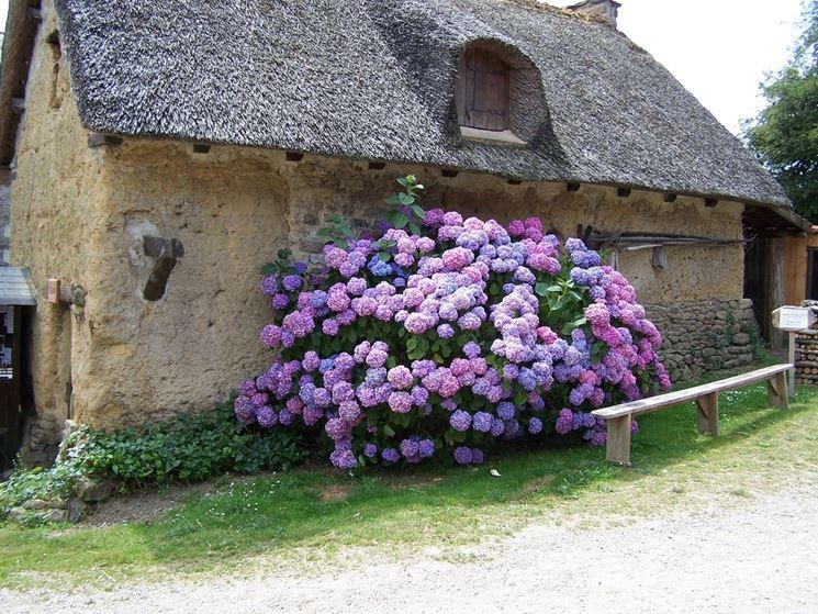 Dettaglio potatura