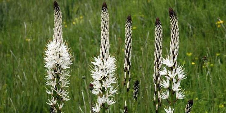Fioritura pianta ornamentale