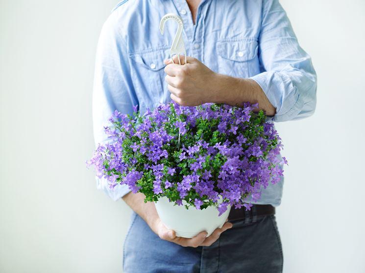 pianta in vaso