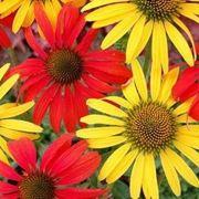 fiori perenni per giardino
